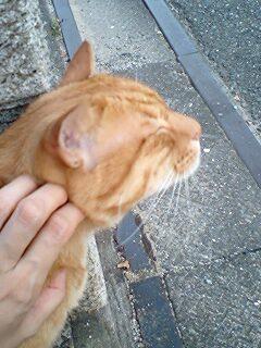 近所の猫君