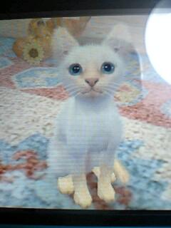 3DS/任天犬の猫