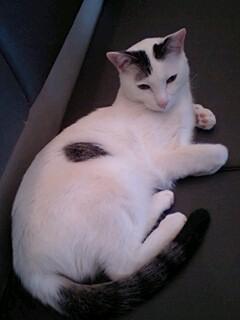 猫カフェの猫写真