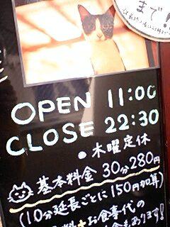 福岡 警固の猫カフェ