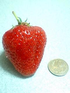 食/あまおうイチゴ